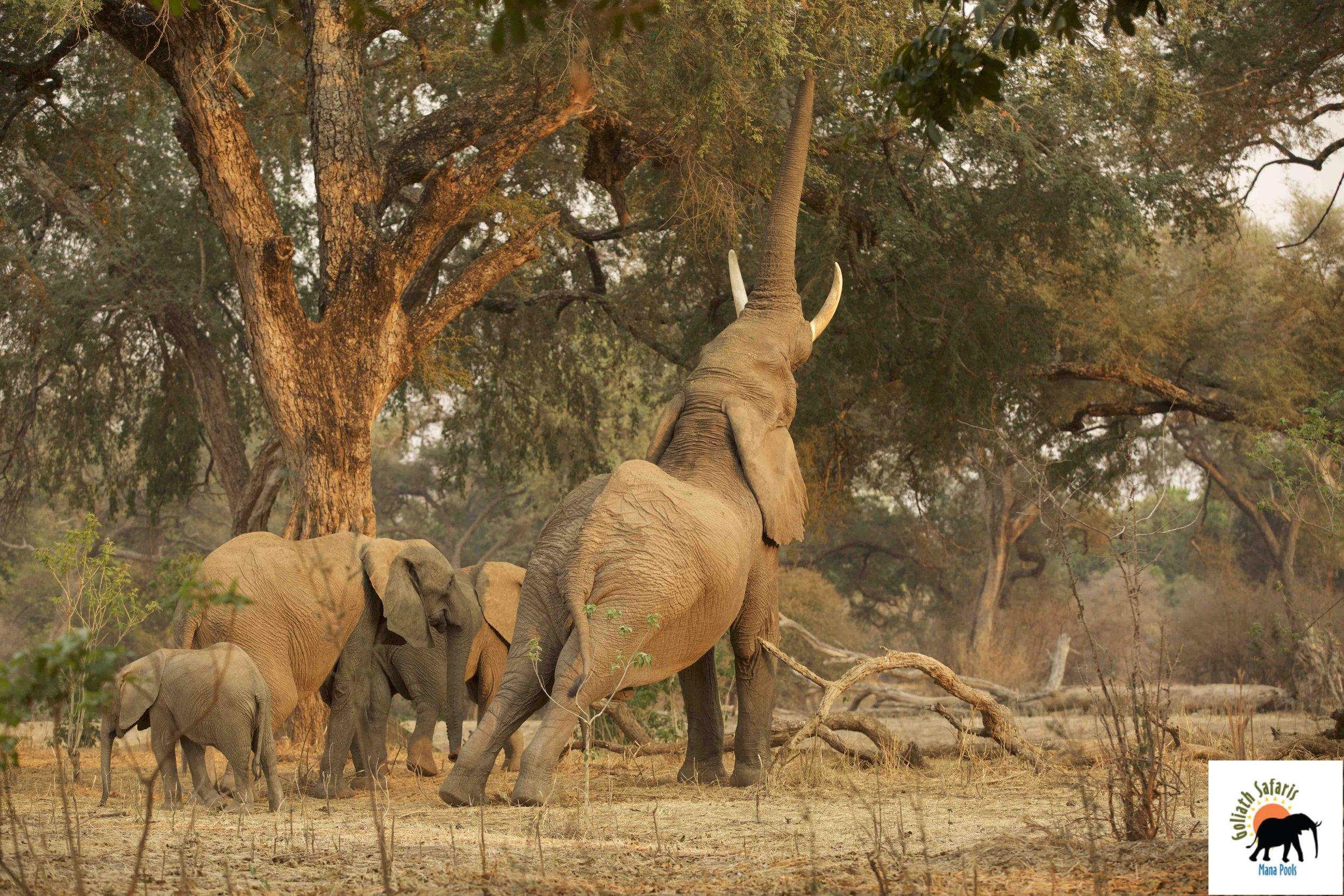 Eléphants au Goliath Safaris camp