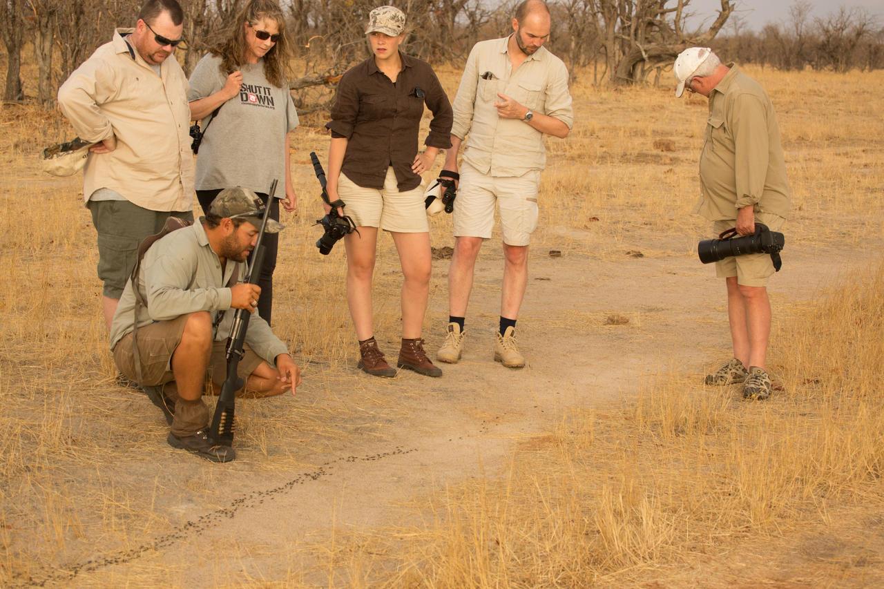 Safari au camp Hwange