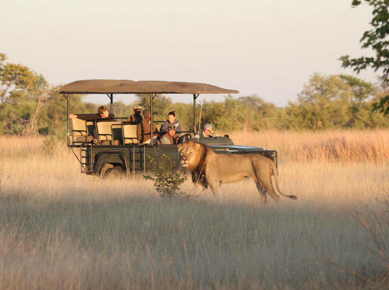 Safari en 4x4 au camp Hwange