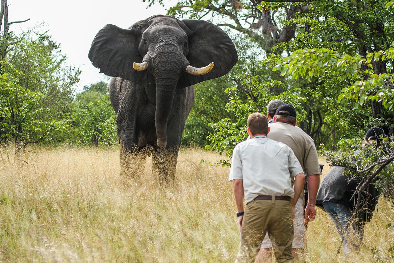 Safari à pied au camp Hwange