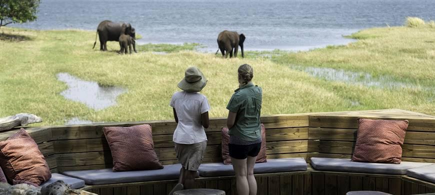 Safari Découvrez le Zimbabwé - éléphants devant le Ruckomechi camp