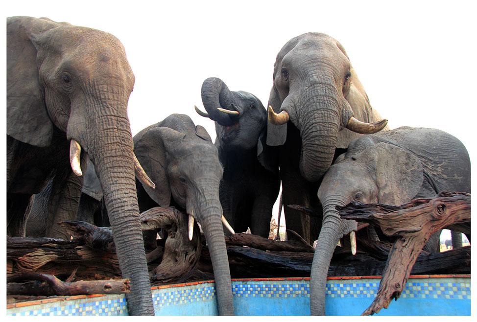 Eléphants s'abreuvant au Nehimba lodge