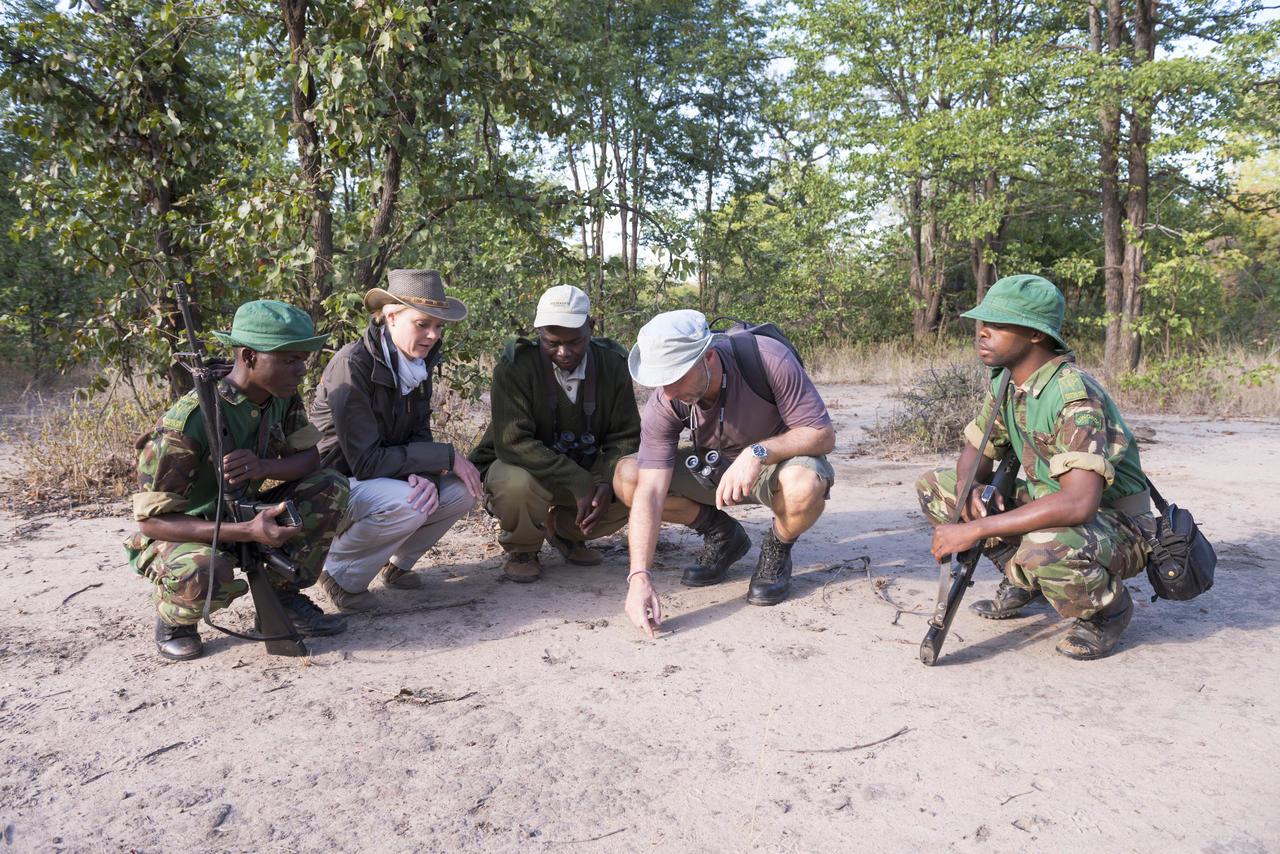 Safari à pied au Mvuu Wilderness lodge