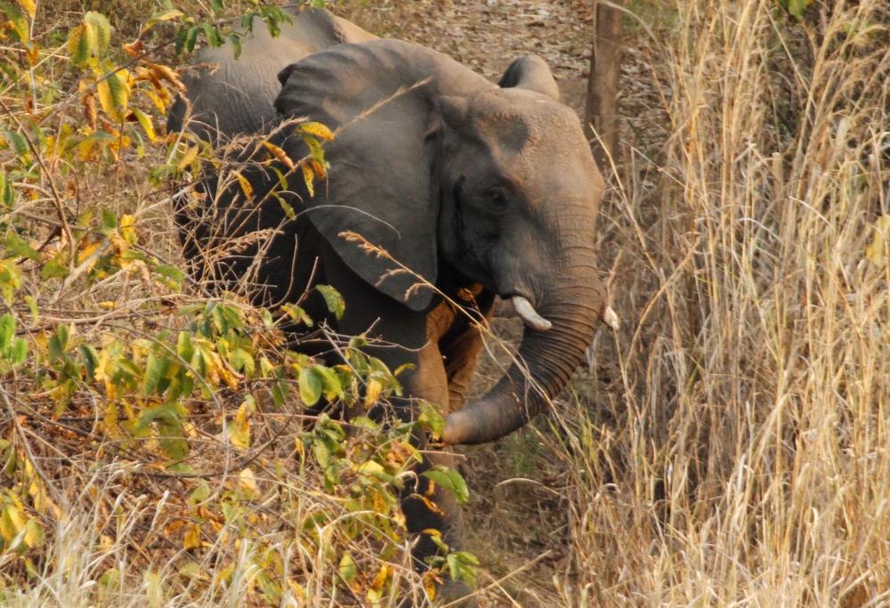 Eléphants au Tongole Wilderness lodge