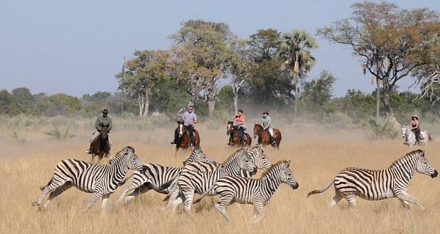 Safari à cheval au Botswana - cheval devant zèbres