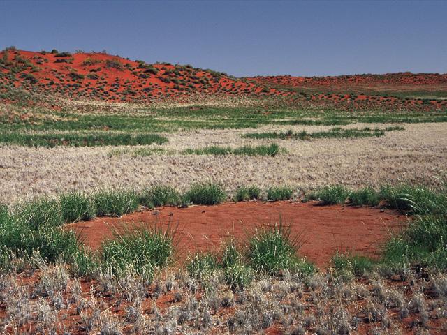 Trek dans le désert namibien - cercle de fée