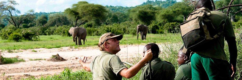 Safari à pied à Ruaha - éléphant au loin