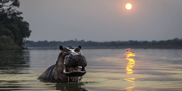 Safari Hors des Sentiers Battus - hippo à Tena Tena