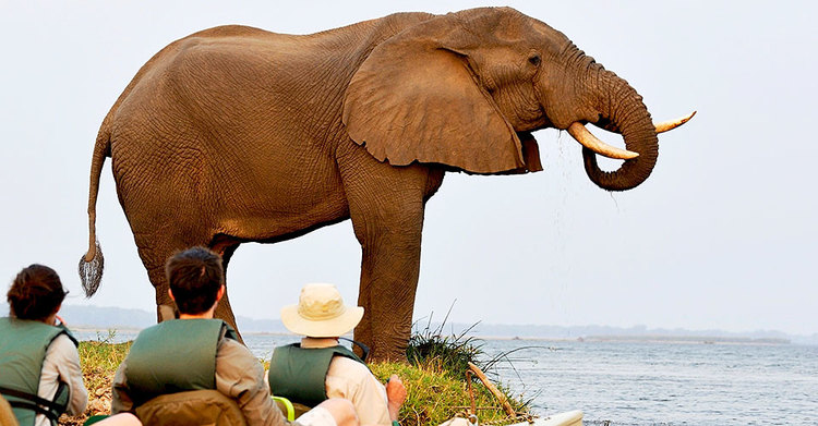 Safari Hors des Sentiers Battus - Kayac à Chiawa