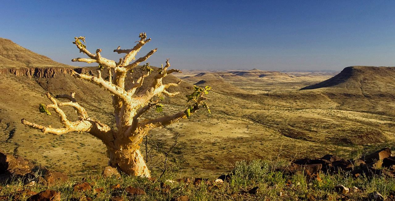 Safari Namibie Beauté Sauvage - paysage à Etendeka