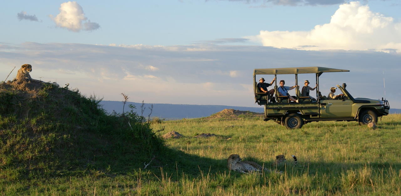 Safari 100% félins en Tanzanie - guépards à Sayari