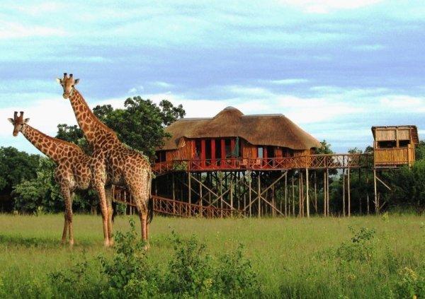 Voyage de noces Kruget et Seychelles - girafes devant Pezulu