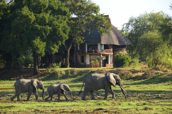 Eléphants devant la Luangwa Safari House
