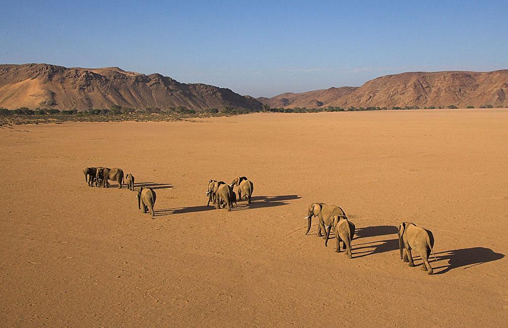 Nord de la Namibie - éléphants du désert