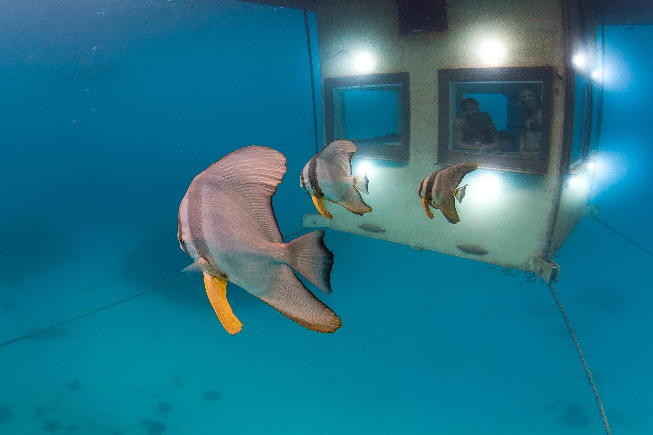 Underwaterroom_Manta Resort4.jpg