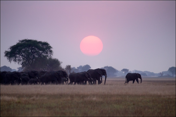 Mukambi Busanga Plains7.jpg
