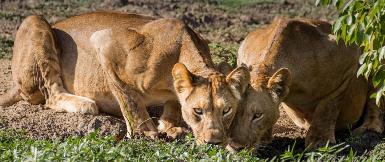 Kaingu Safari lodge8.jpg