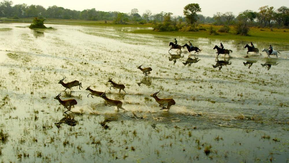 Safari à cheval -