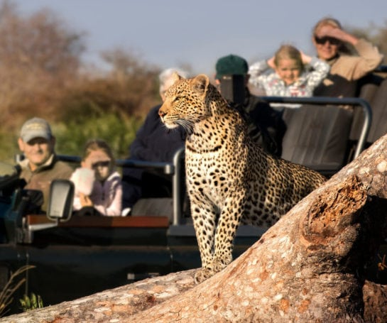 RockFig-Safari-Lodge_Game-Drive-with-Leopard3_Out-on-safari_banner-1-545x455.jpg