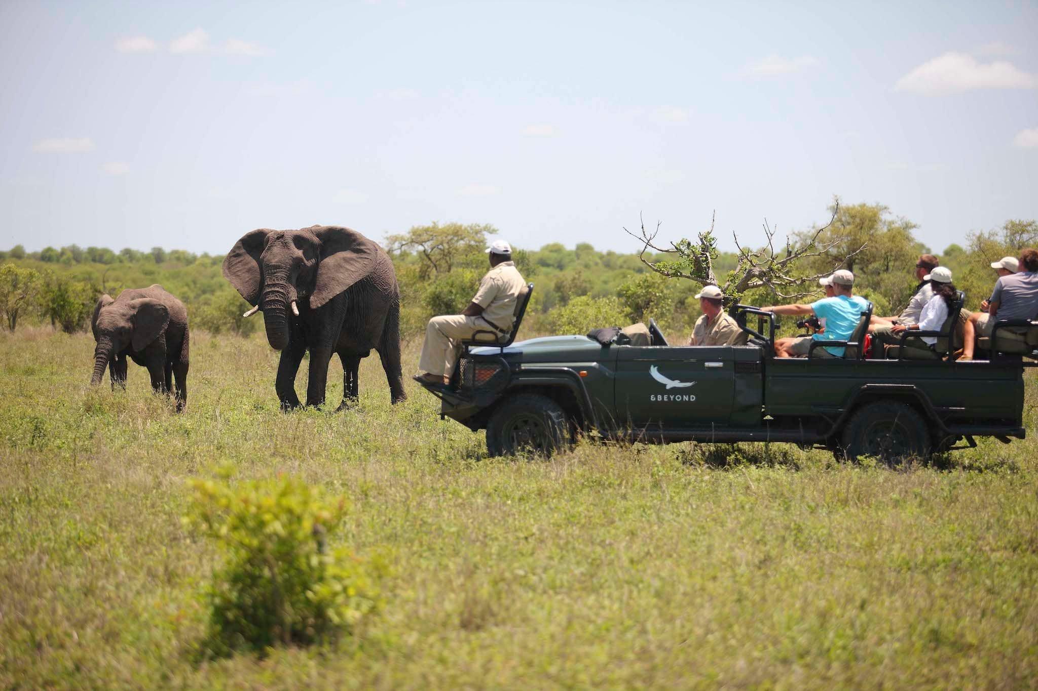 andBeyond-ngala-safari-lodge-activities-game-drive-01.jpeg