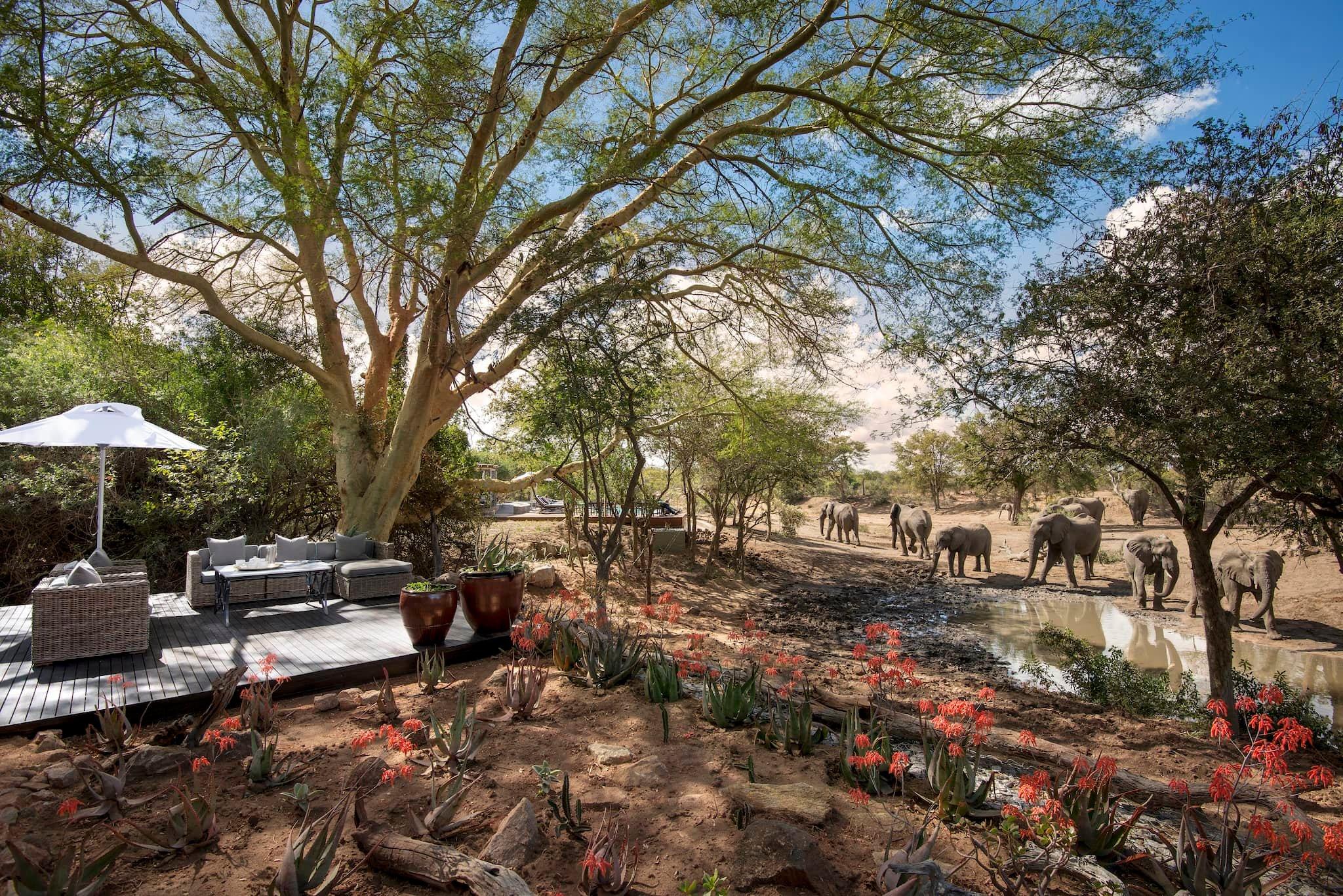 andBeyond-ngala-safari-lodge-exterior-watering-hole-view-01.jpeg