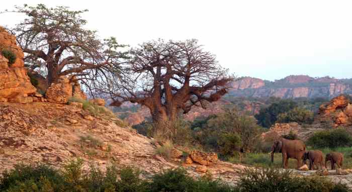 Paysages et vies sauvages au Tuli Safari lodge.jpg