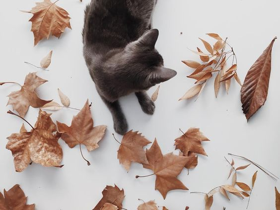 cat among leaves. - BOARD: AUTUMN.