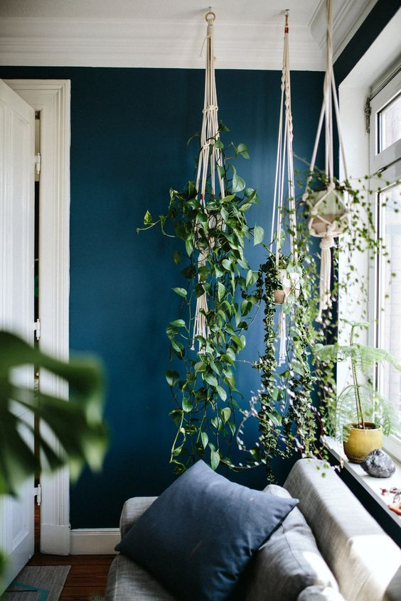 Hanging planters. - I would love to hang my bedroom full of these. Pretty AND out of paws' reach. ;)