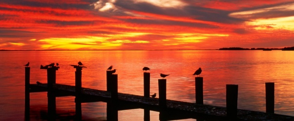 seagulls_at_sunset_fort_myers_florida__1600x1-t2.jpg