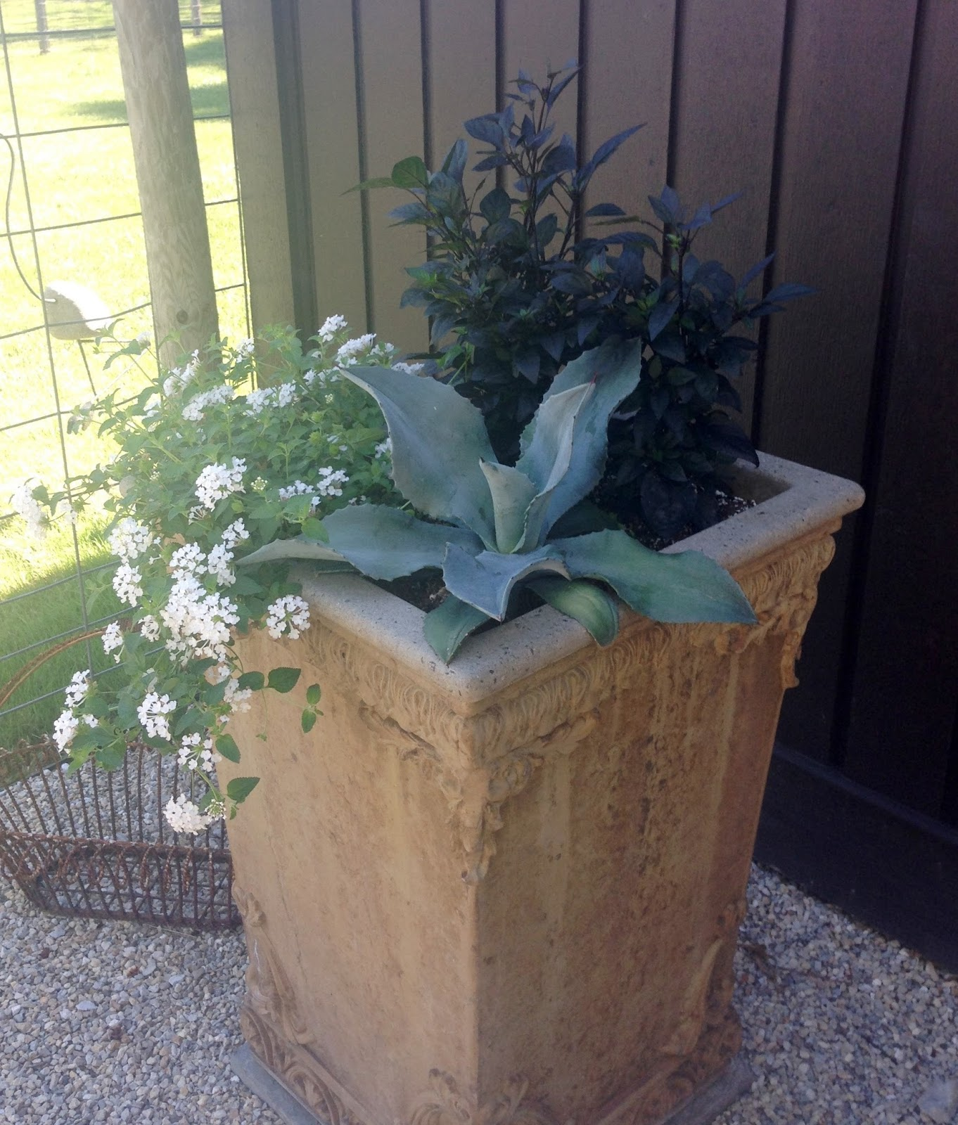 drought tolerant planter with varied texture