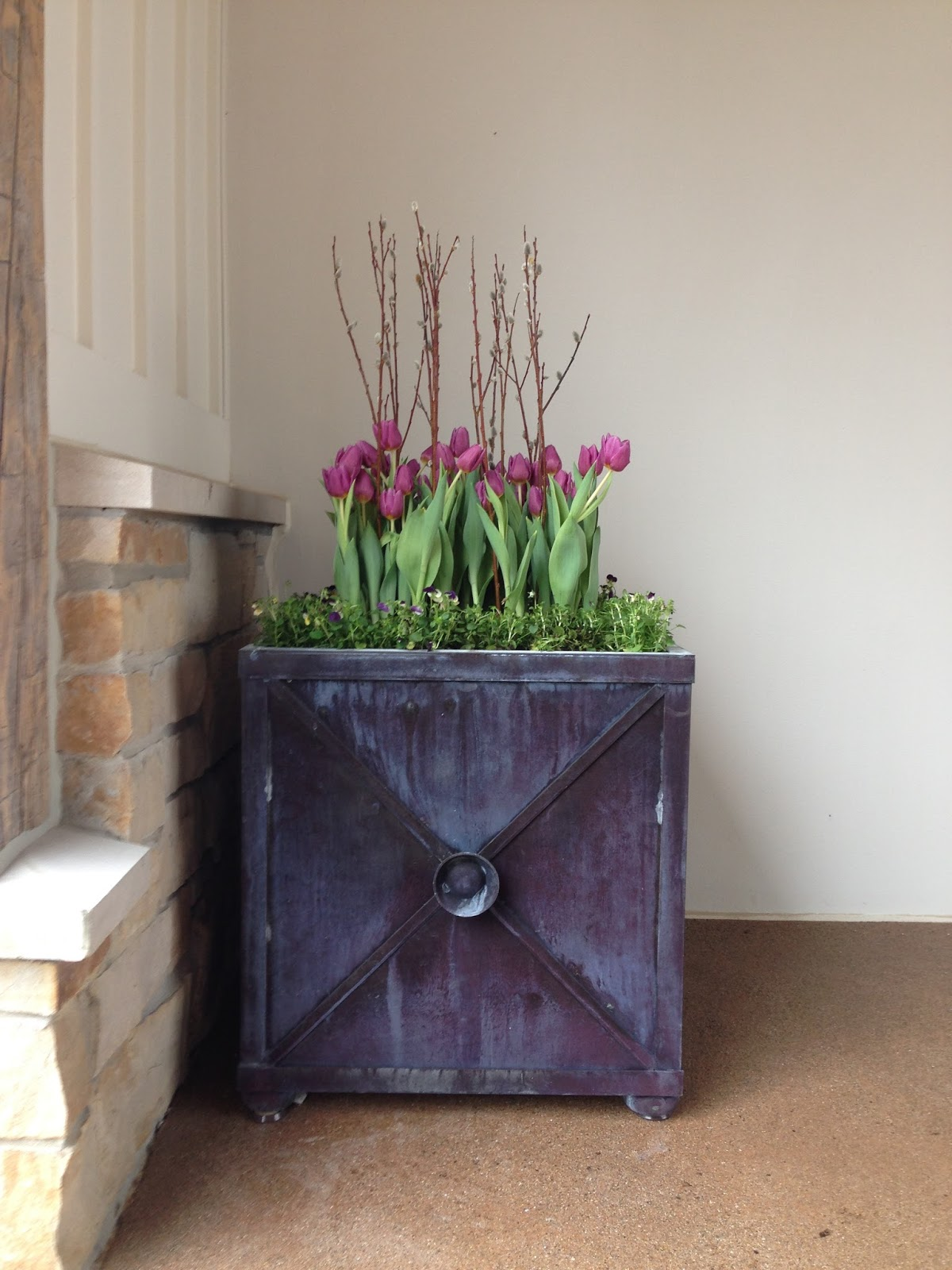 modern spring planter purple tulips