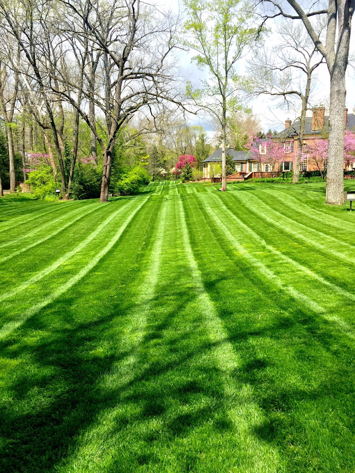 indianapolis seeded lawn
