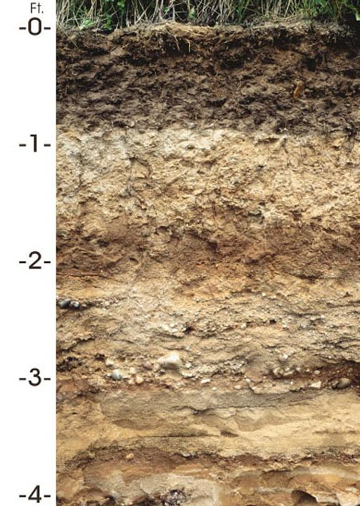 The most fertile soil is in the top layer. Photo courtesy of USDA.