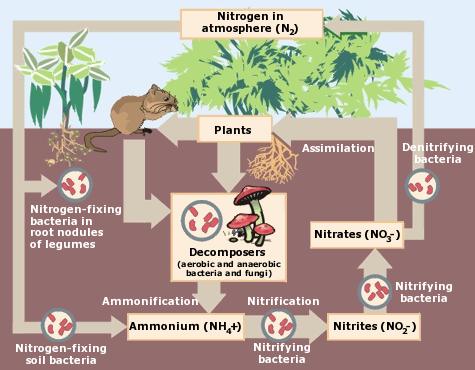 Image courtesy of the EPA