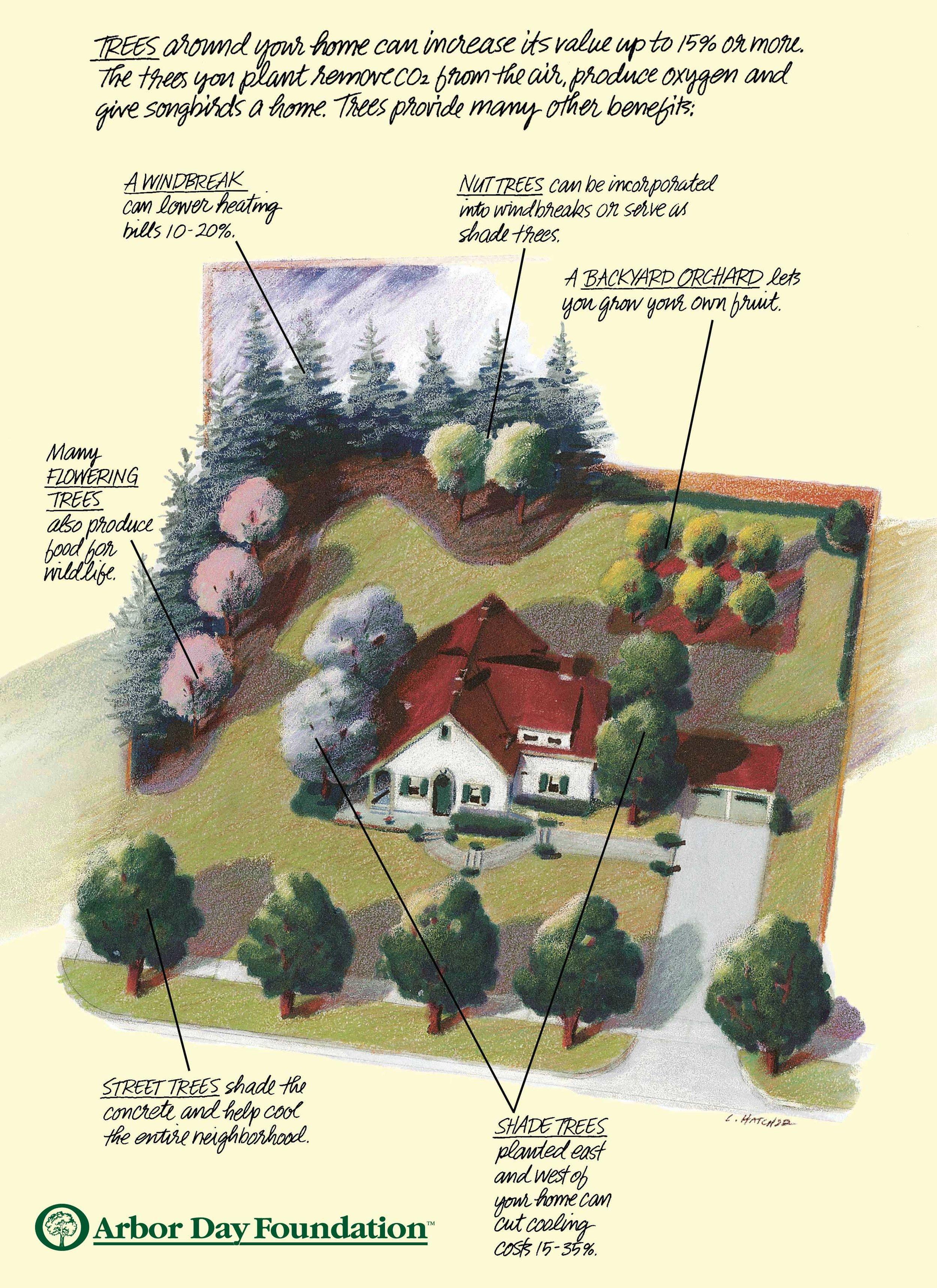 Image courtesy of Arbor Day Foundation