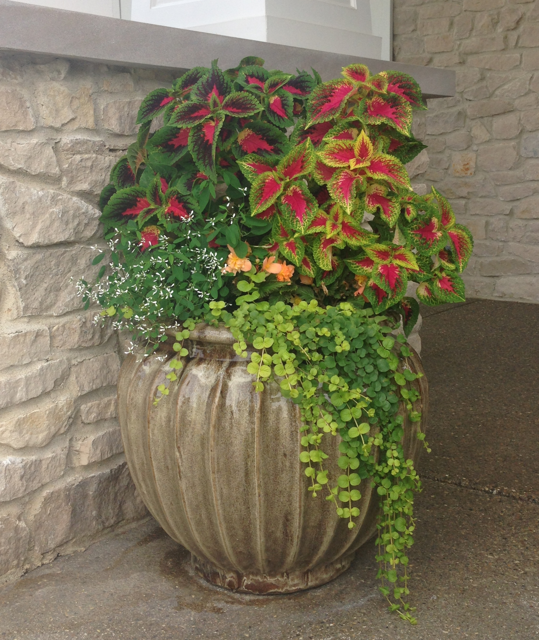 Coleus and Creeping Jenny Photo by Maria Gulley