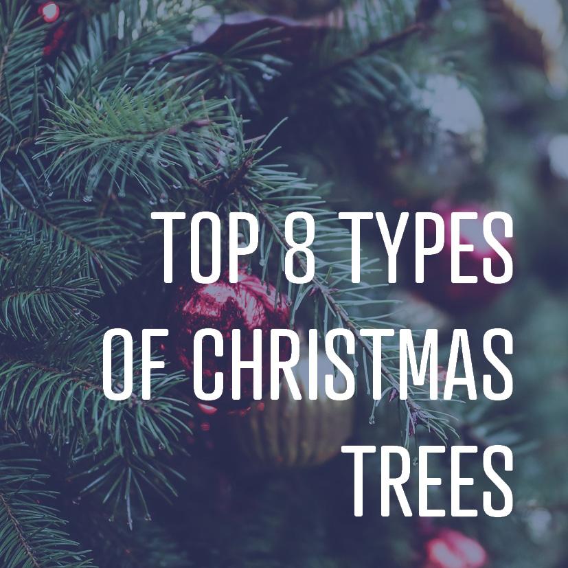 12-16-16 top 8 kinds of Christmas trees.jpg