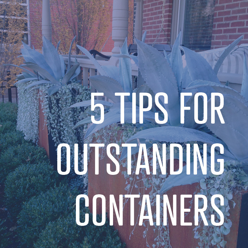 09-23-16 5 tips for outstanding containers.jpg
