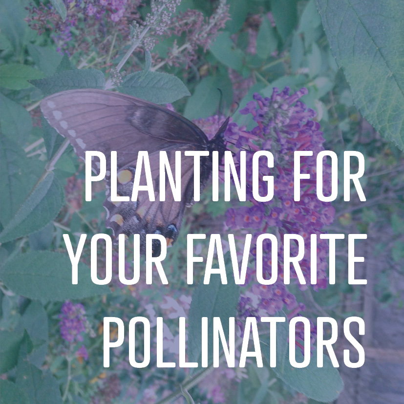 Want to bring pollinators into your yard? We have list of all kinds of plants for all kinds of birds and bees.