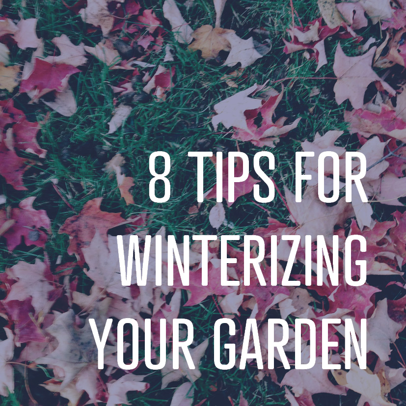 11-11-16 8 tips for winterizing your garden.jpg