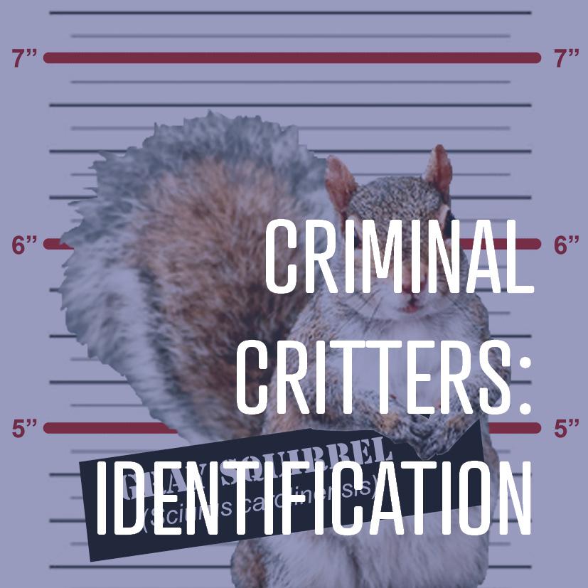 07-15-16 criminal critters- identification.jpg
