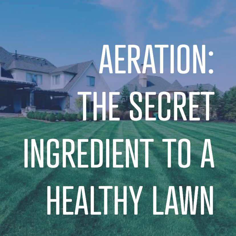 10-03-16 aeration- Secret ingredient to a healthy lawn.jpg