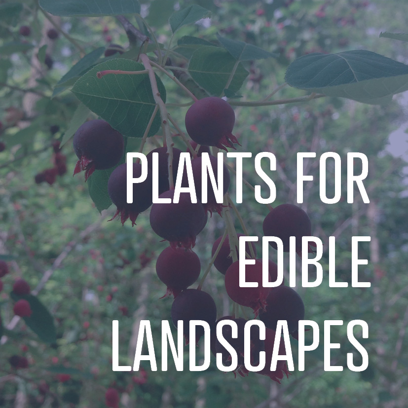 08-22-16 plants for edible landscapes.jpg