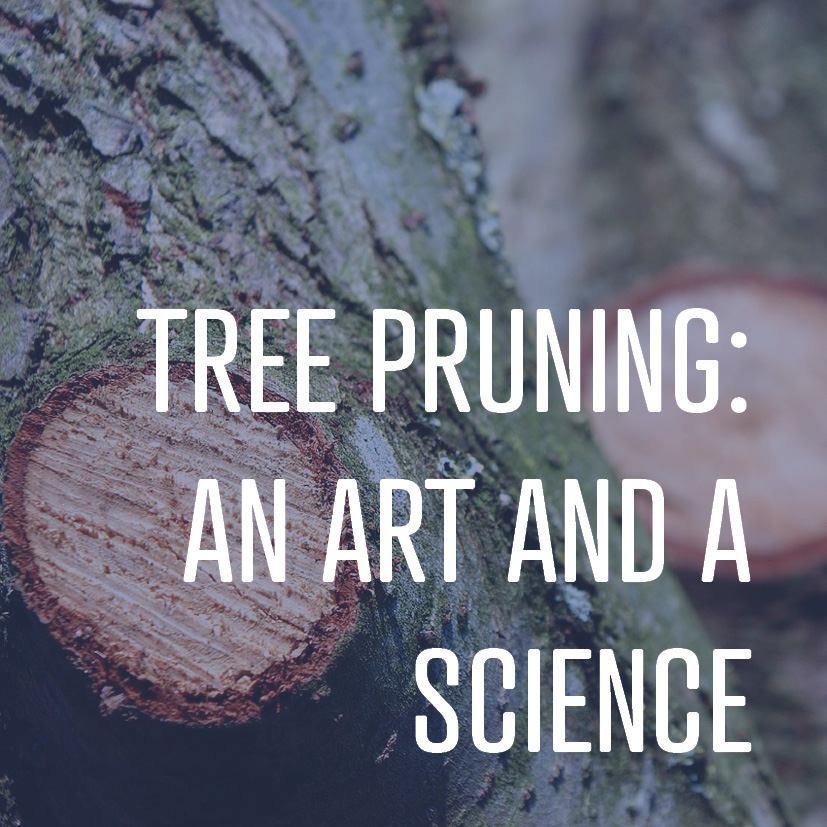 08-19-16 tree pruning an art & a science.jpg