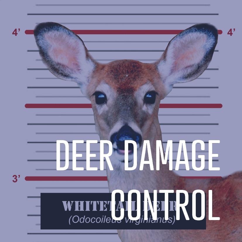 02-22-16 deer control.jpg