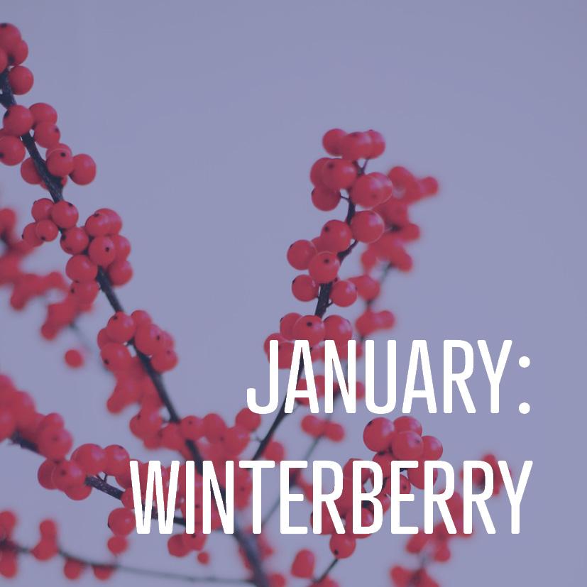01-06-16 january winterberry.jpg