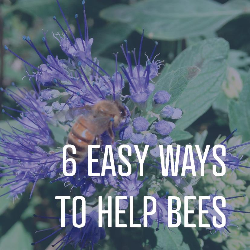 06-06-16 six easy ways to help bees.jpg