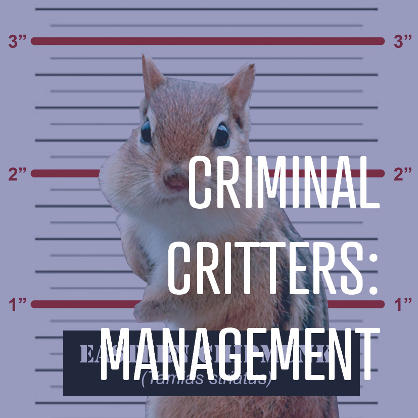 07-18-16 criminal critters management.jpg