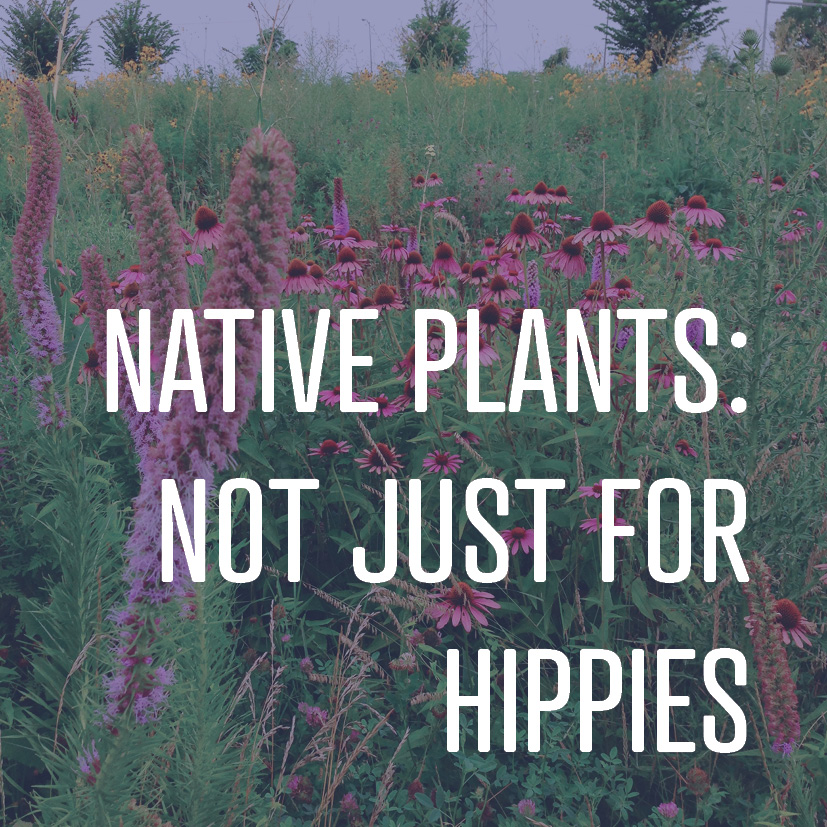 05-16-16 native plants not just for hippies.jpg