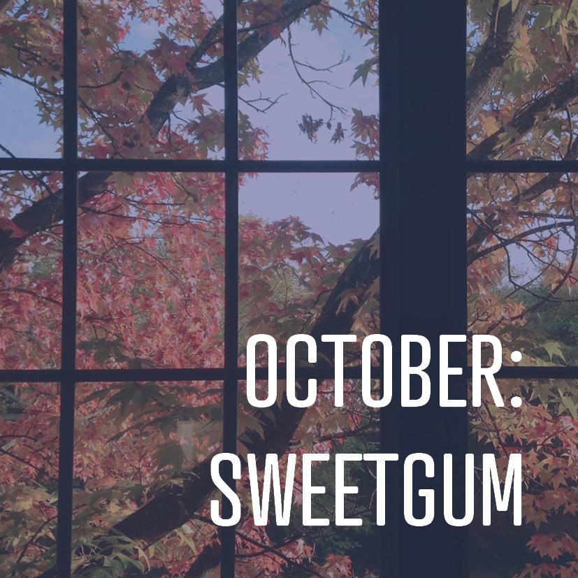 10-02-18 OCTOBER SWEET GUM.jpg